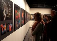 Wystawa Wrocławm